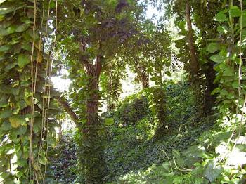Area totalmente cercada e arborizada.