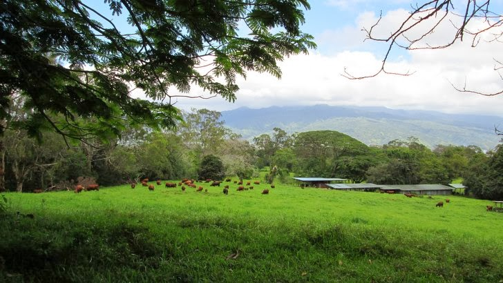Le plateau de Taravao
