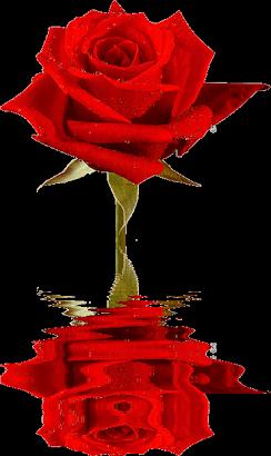 Una rosa para la revolución