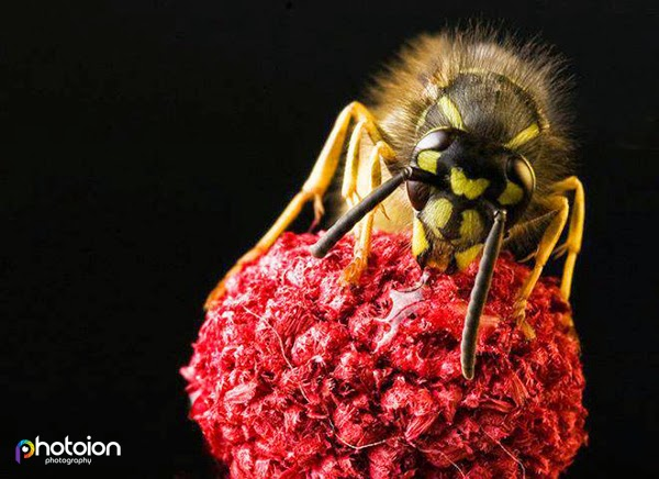 Up close and personal, learn Macro Photography with Photoion, photography courses, London