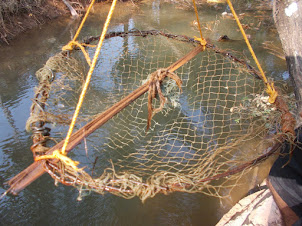 "A ""Crab Trap"" for catching crabs in the river canals."