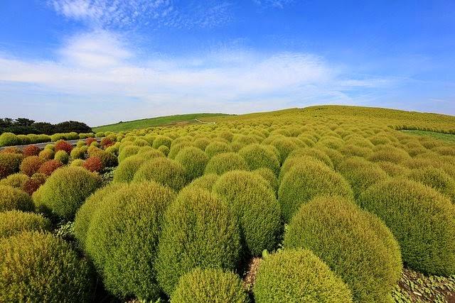 شاهد صور احلى حديقة فى العالم هيتاشى اليابانيه