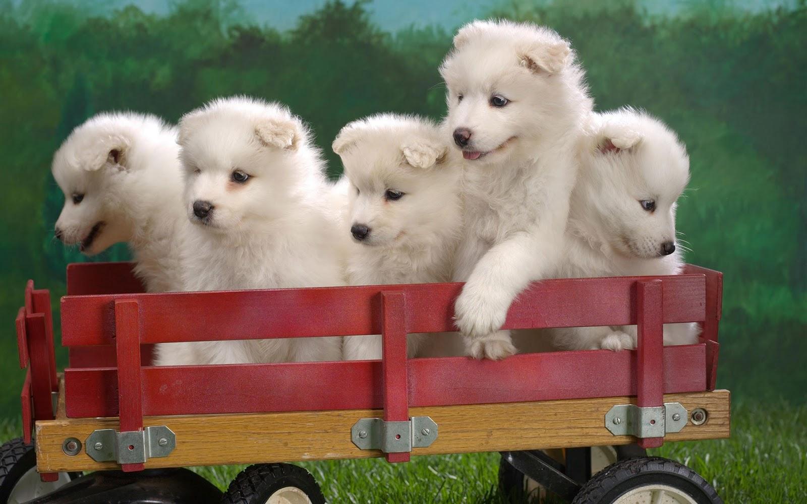 http://1.bp.blogspot.com/-Edur9SDcF_k/Toa477HxFpI/AAAAAAAAAk8/W2EZ9RqmiFc/s1600/Puppies-wallpaper.jpg