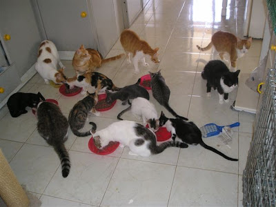 a room of rescued cats