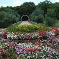 花,森林,代々木公園〈著作権フリー無料画像〉Free Stock Photos