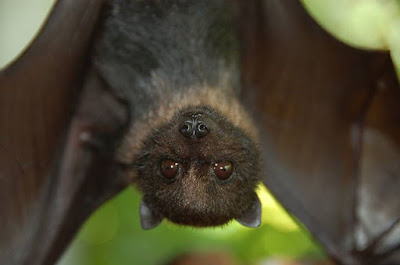 Bats are amazing animals, and have an intricately designed echolocation system.