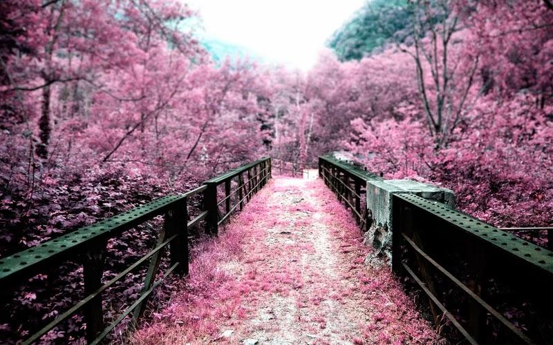 Japanese cherry blossom garden wallpaperhttprefreshrosespot japan landscape cherry blossom landscapes cherry blossoms flowers bridges pink flowers mightylinksfo