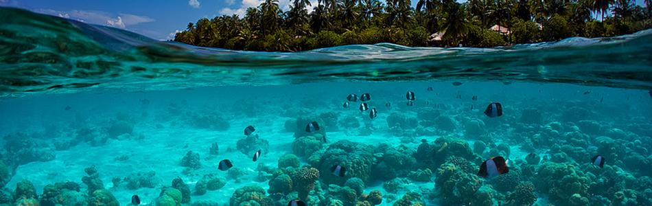 Las Maldivas (Asia)