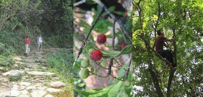 Hike to World Peace Stupa, Wild Berries