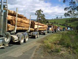 Timber Exports