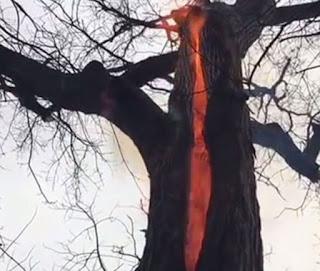 'Árvore do diabo' é filmada nos Estados Unidos