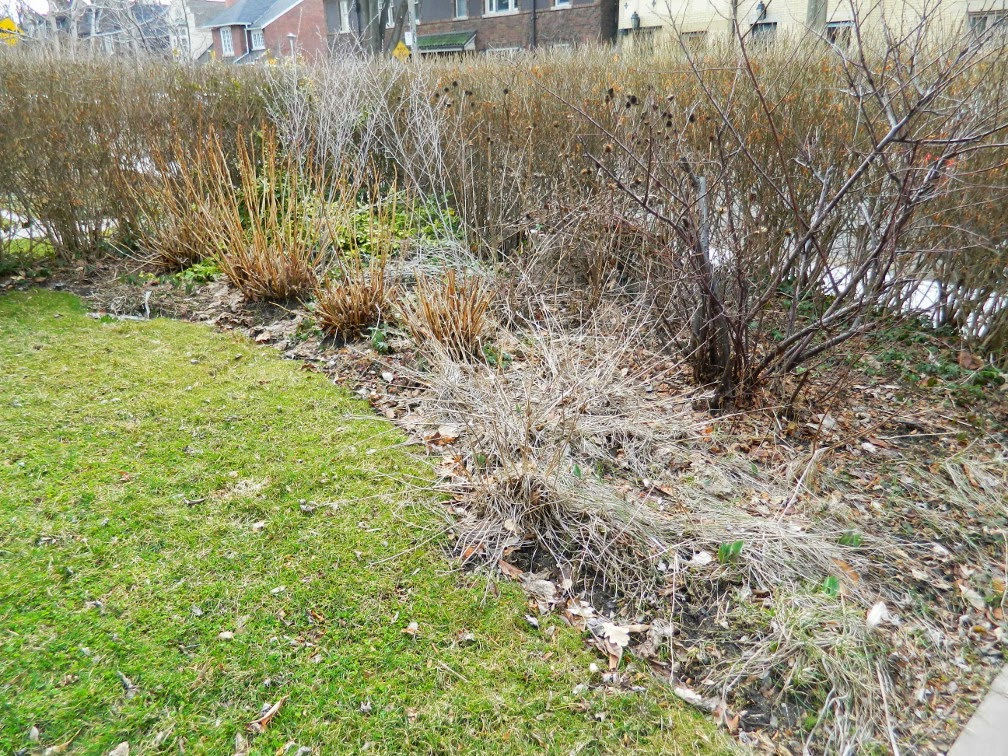 Roxborough West spring cleanup before Paul Jung Gardening Services Toronto