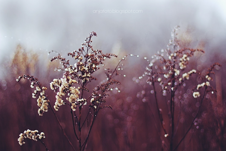 bokeh, bokeh photography, fotografia przyrodnicza, nature photography, anjafotografia