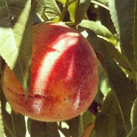 peach,nature,Country lanscapes,Santiago, Chile, iPhoneography Selection January 7 2013,pablolarah,Pablo Lara H Blog