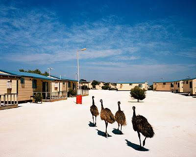 Trent Parke - Sharkbay, 2006