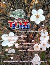 DR 18 TOT Bonsai