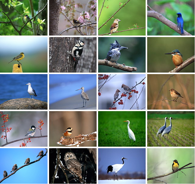 birds photos wallpaper