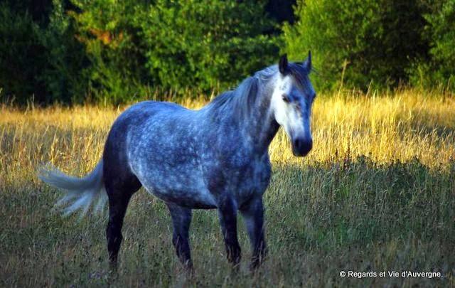 cheval, Sommet de l élevage 2014