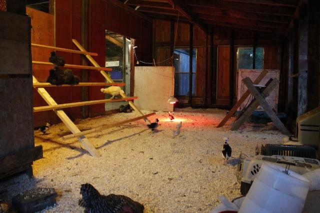 Natural Chicken Keeping: Fire Safety in your Chicken Coop & Barn