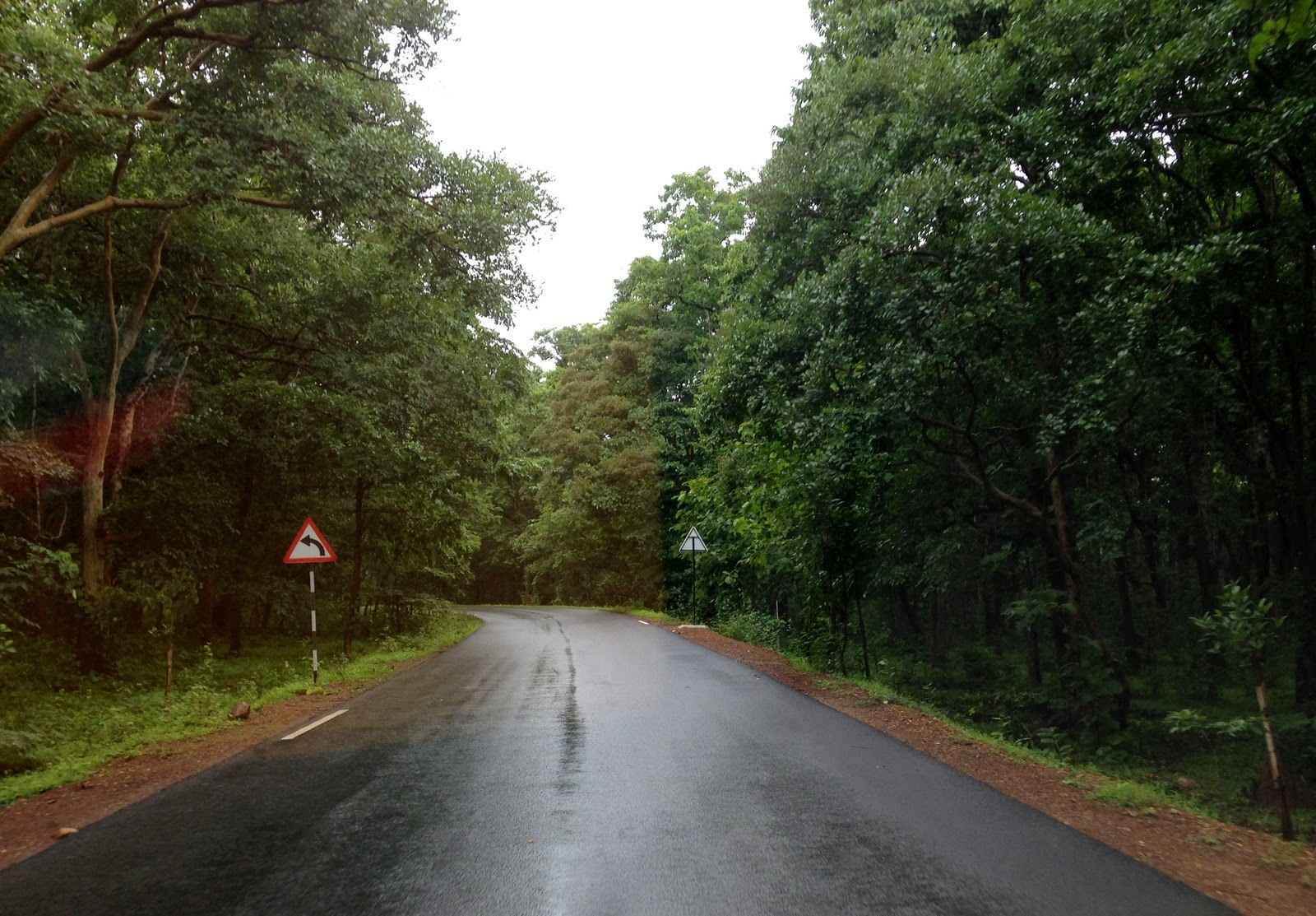 Rains in forest means clear tarmac and lovely greenery!