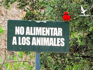 Las aves son silvestres