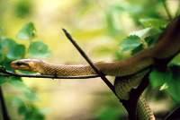 Vertebrata Reptil-Ular