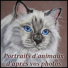 Cindy Barillet - Art animalier