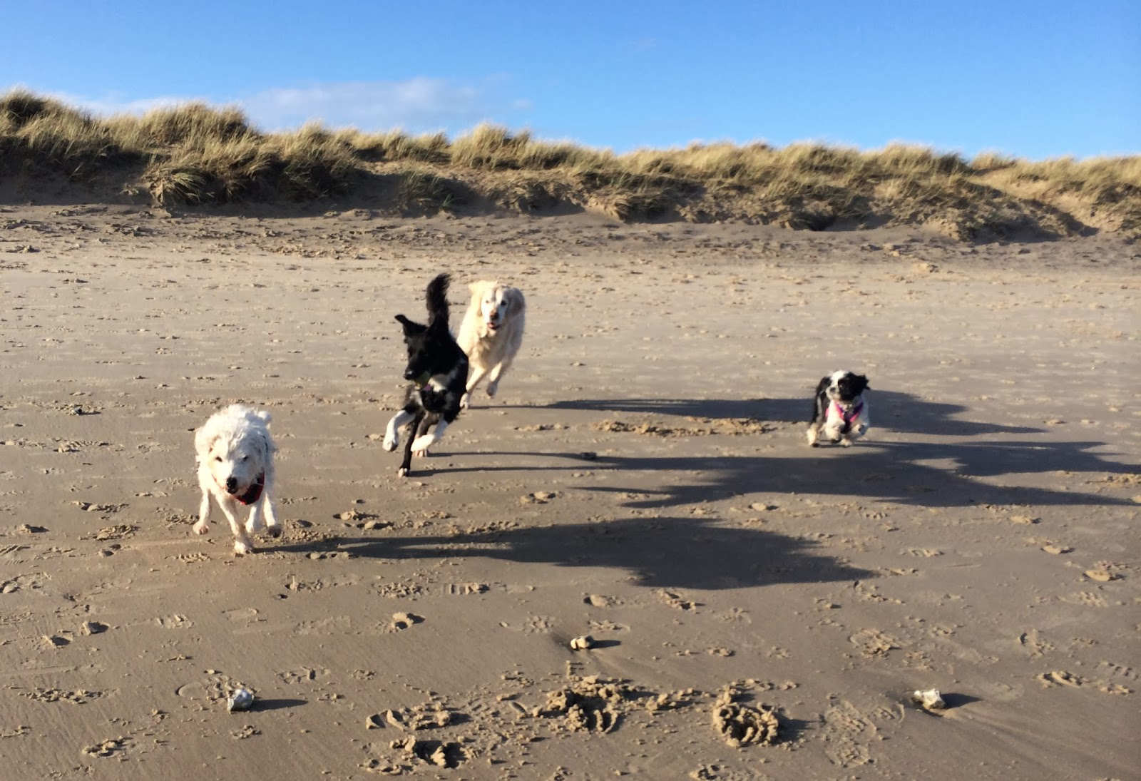 Can You Take Dogs On Studland Beach