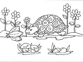 Desenhos Para Pintar A Tartaruga Se Alimentando