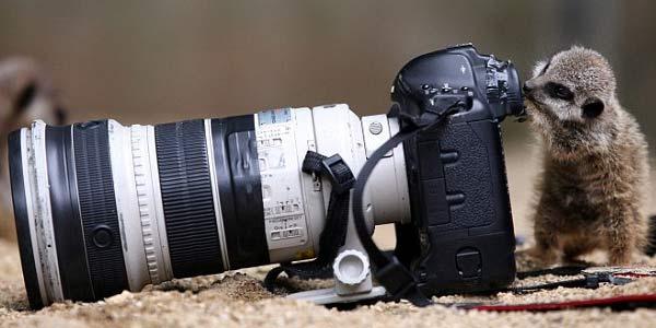 Tips Sukses Jadi Fotografer dengan Bayaran Tinggi