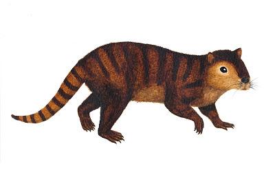 Kimbetopsalis