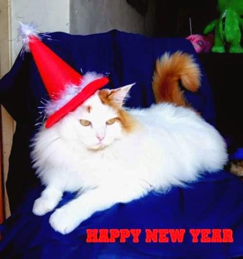 O MICA deseja a todos os seguidores e amigos um 2015 repleto de Saúde, Paz e Sucesso.