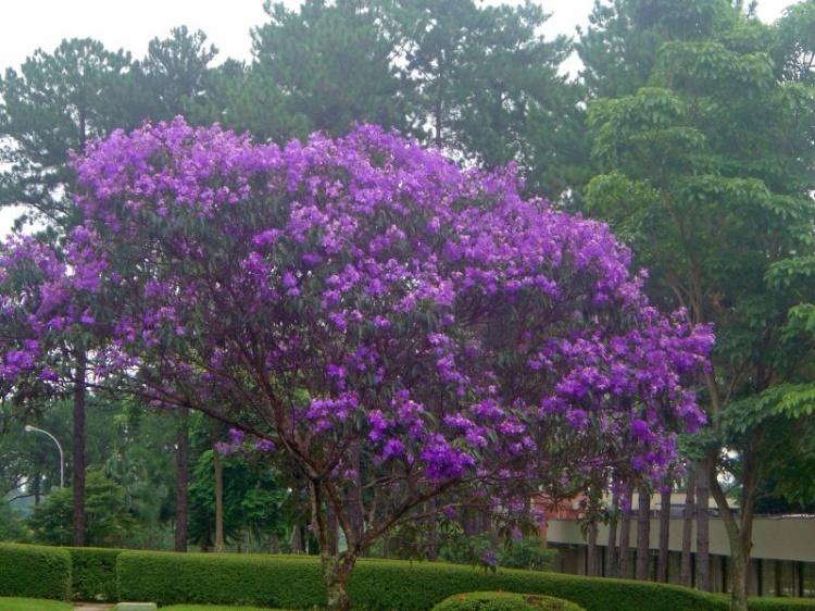 ipe de jardim familia:terça-feira, 14 de fevereiro de 2012