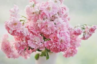 #9 Greatest Flowers Wallpaper HD