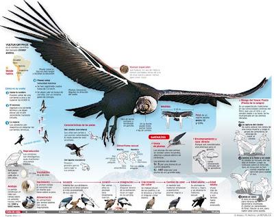 El avestruz le gana el t 237 tulo de m 225 s grande pero no vuela el m 225 s