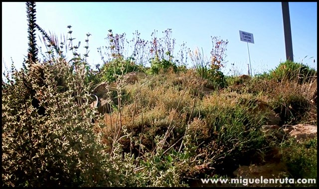 Jardín-Botánico-Castilla-La-Mancha_8