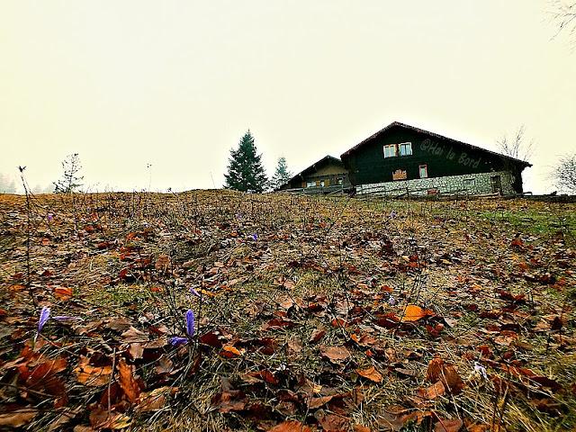 cabana poiana secuilor aprilie 2013