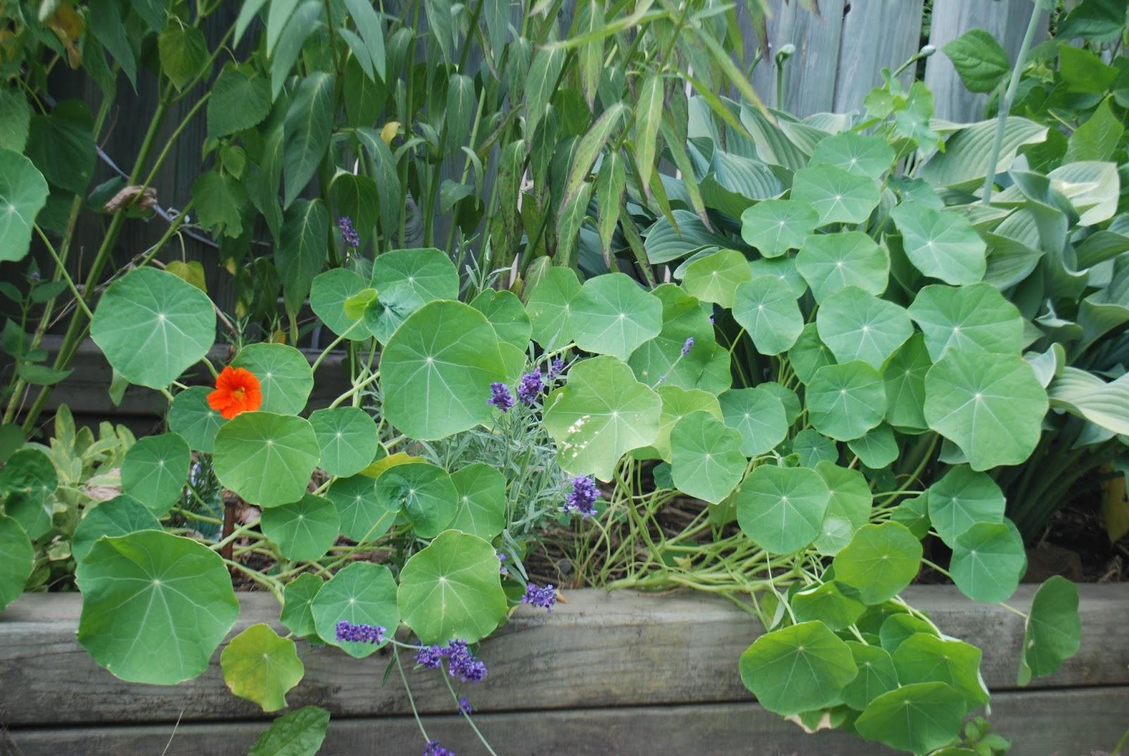 3 jardins au qu bec la bonne mine de la capucine for Catalogue fleurs et plantes