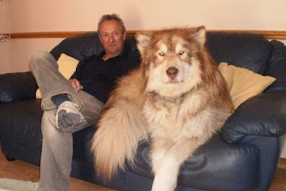 Unseen Big Dogs