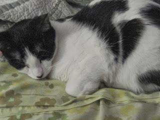 Jillian's cat, Ewok.