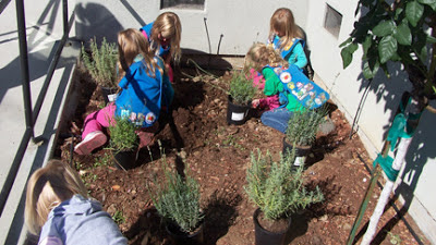 Four girl scouts planting a lavender garden at GDB.