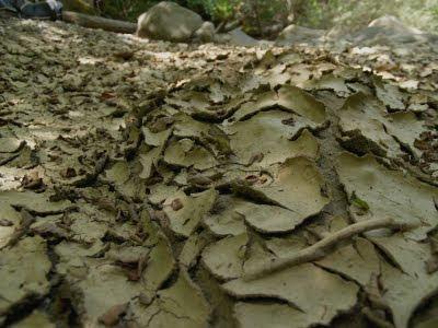 Torrente savena: terra secca