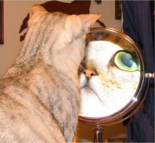 Funny cats - part 95 (40 pics + 10 gifs), cat pictures, cat facing a mirror