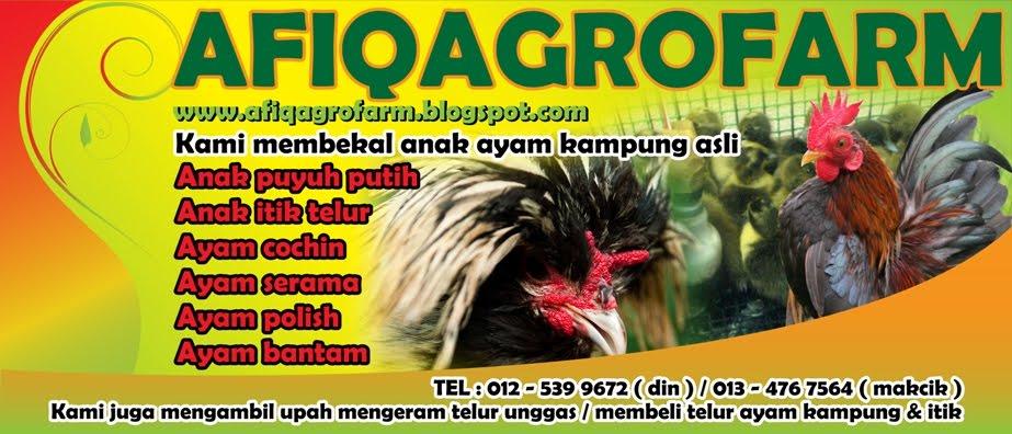 Penternakan Ayam Kampung Asli/Ori