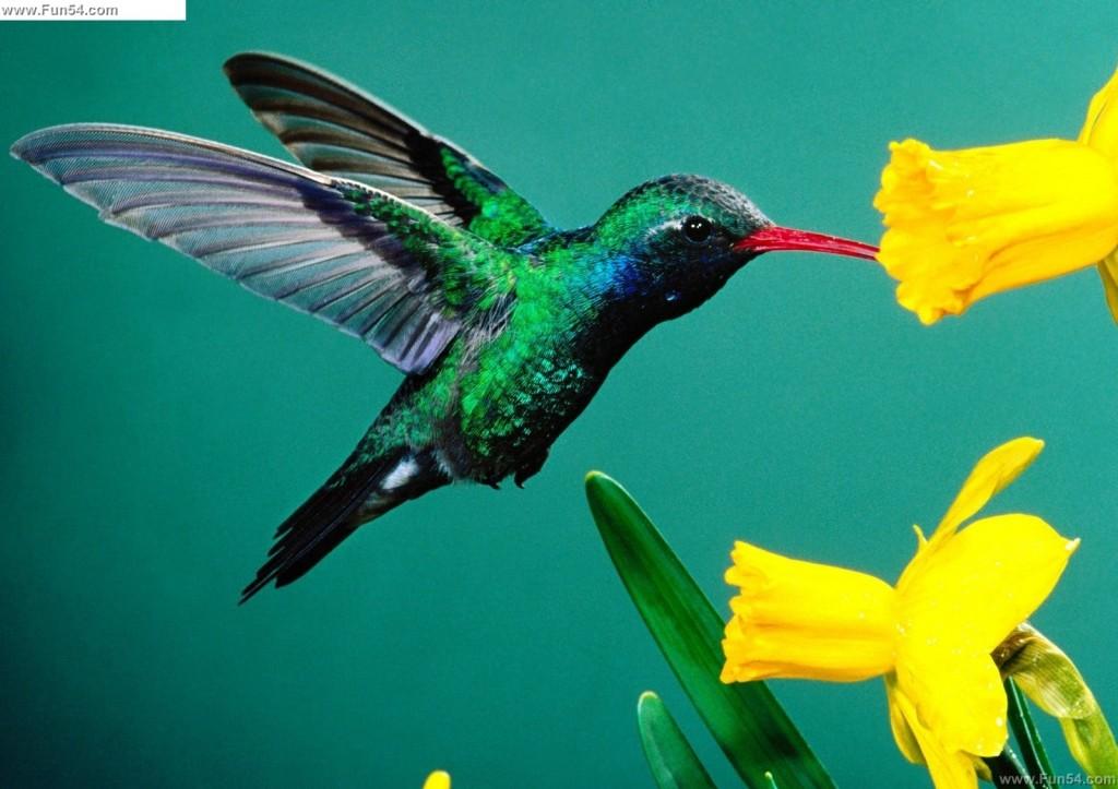 Cute Bird Eating Flower While Flying High Definition For Desktop