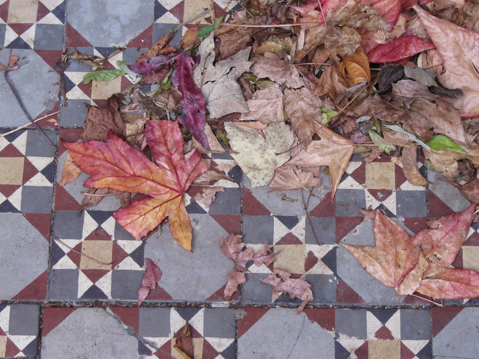 multi coloured tiles with dried up leaves