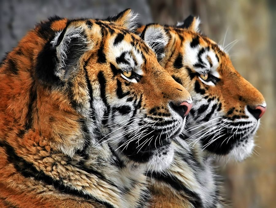 17. Twins by Klaus Wiese