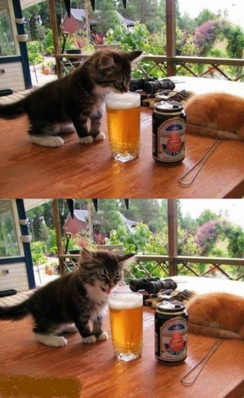 The Taste of Beer
