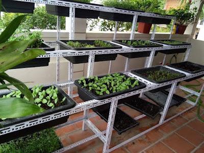 Thiết kế vườn rau tại nhà siêu đơn giản và độc đáo