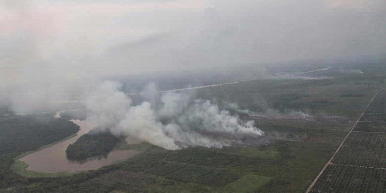 Petisi: Cabut izin perusahaan pembakar hutan di Riau!